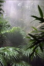 Rain forest Royalty Free Stock Photo