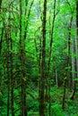 Déšť les