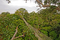 Rain Forest Canopy Suspension Trail Royalty Free Stock Photo