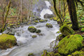 Rain forest and cascade Royalty Free Stock Photo