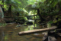 Rain forest creek Royalty Free Stock Photo