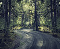 Rain forest with a dirt road in Stock Photography