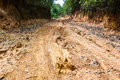 Rain forest with a dirt road in rural northern thailand Stock Photo