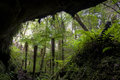 Rain forest fern trees cave entrance new zealand Stock Photo