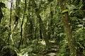Lluvia bosque verde selva