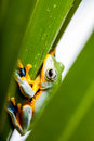 Rain forest, natural environment, exotic frog Stock Image