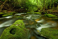 Rain Forest Stream Royalty Free Stock Photo