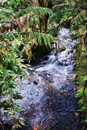 Rain forest stream Stock Photo