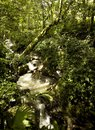 Rain forest stream Stock Photos