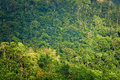 Rain forest at sunrise view from the top on the Royalty Free Stock Photography