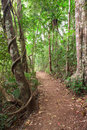 Rain forest trail Tablelands Australia Royalty Free Stock Photography