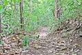 Rain forest trail trekking path Royalty Free Stock Photo