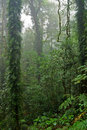 Rain forest trees and plants Stock Photography