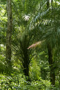 Rain-forest or tropical forest Royalty Free Stock Images