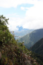 Rain forest in Yungas region, Bolivia Royalty Free Stock Photo
