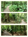 Rain forests Stock Photos