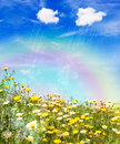 Rain over a yellow meadow Royalty Free Stock Photos