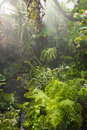Rain in tropical rainforest heavy rainfall Stock Images
