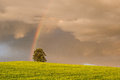 Rainbow on the barley field before storm Royalty Free Stock Photos