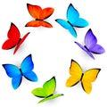 Rainbow butterflies on white