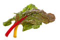 Rainbow chard on white background Royalty Free Stock Photo