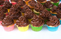 Rainbow of chocolate frosted cupcakes Royalty Free Stock Image