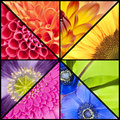 Rainbow collage of flowers in square frame Royalty Free Stock Photo
