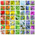 Rainbow colored flower collage Stock Images