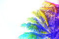 Rainbow colored palm tree crown on sky background. Fantastic toned photo with coco palm tree on white. Royalty Free Stock Photo