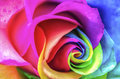 Rainbow flower close up macro Royalty Free Stock Images