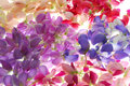 Rainbow of flowers Royalty Free Stock Photo