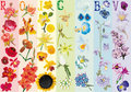 Rainbow flowers collection Stock Image