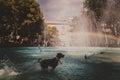 Rainbow in fountain and dog having fun Stock Image