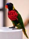 Rainbow Lorikeet bird on post, Florida Royalty Free Stock Photo