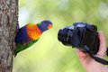 Rainbow lorikeet and camera details of a in front of a Stock Photos