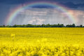 Rainbow over the field Royalty Free Stock Photo