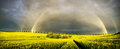 Rainbow over a field of young corn Royalty Free Stock Photo