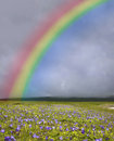 Rainbow over the green field Royalty Free Stock Image