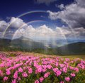 Rainbow over the mountain flowers Royalty Free Stock Photo