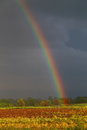 Rainbow after the storm vibrant in a farm field with dark clouds in background Stock Photo