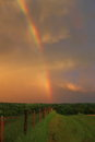 Rainbow at sunset vibrant with stormy skies and green landscape just after Royalty Free Stock Images