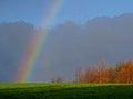 Rainbow On Trees