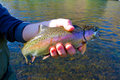 Rainbow Trout Catch Release Royalty Free Stock Photo
