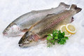 Rainbow trout on ice with fresh herbs at the fish market Royalty Free Stock Photo