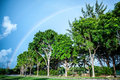 Rainbows in the beach looking beautiful background tree and cloud Royalty Free Stock Photo