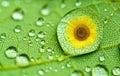 Raindrop closeup on a green leaf Stock Photo