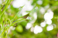 Raindrop on a leaf of grass Stock Images