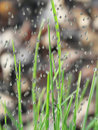 Raindrops on grass Royalty Free Stock Photos