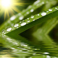 Raindrops on green grass Stock Photography