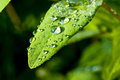 Raindrops on leaf Stock Images